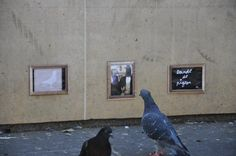 exhibition for pigeons/combo