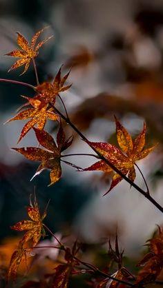 Fall Tree Art Iphone 5s Wallpaper Download Iphone