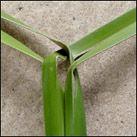 weaving a flax flower step 1