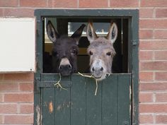 oh my stars check out these sweet donkey faces.....