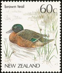 Auckland Islands Teal (Anas aucklandica)