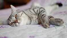 Cat in bed wallpaper