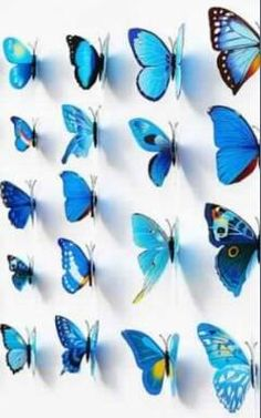 Check out this item in my Etsy shop https://www.etsy.com/listing/248867009/12-3-d-magnetized-butterfly-stickers