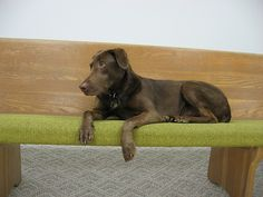One of the newest designer dogs to come on the market lately is a very fine mix breed.