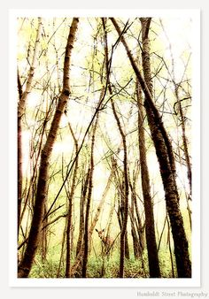 This listing is for an open edition, unmatted, unframed print.  TITLE: Through The Trees An original fine art animal photograph by Humboldt Street Photography. A gentle deer peeks through the trees in this sunlit woodland scene of green, yellow and brown.  AVAILABLE SIZES: 8x12........$32: ready to ship within 2-3 days 12x18......$65: ready to ship within 2-3 days 16x24......$95: special order, ready to ship within 5-8 days 20x30......$140: special order, ready to ship within 5-8 days…