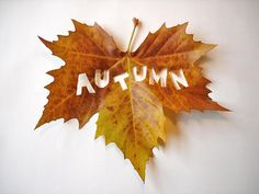 A is for Autumn (fall, leaf, cutout) Autumn Day, Hello Autumn, Autumn Leaves, Fall Winter, Autumn Rose, Autumn Forest, Autumn Garden, Photo Vintage, Seasons Of The Year