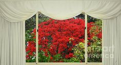 Vibrant #Red #Blossoms #Window_View by #Kaye_Menner #Photography Quality Prints Products at: http://kaye-menner.pixels.com/featured/vibrant-red-blossoms-window-view-by-kaye-menner-kaye-menner.html