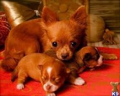 Awwww mom & pups pretty color