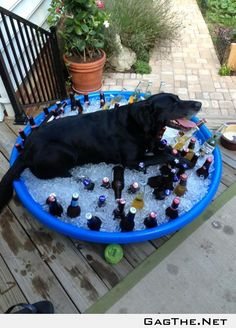 Beer in a pool of ice, it sounded like a good idea at the time.