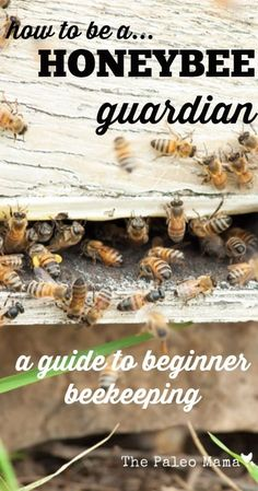 Gardening For Beginners How to Be a Honeybee Guardian: A Guide to Beginner Beekeeping - Ready to get started in beekeeping? This post will show answer the common questions around beginner beekeeping and give you tips to get started! Beekeeping For Beginners, Gardening For Beginners, Gardening Tips, Container Gardening, How To Start Beekeeping, Permaculture, Raising Bees, Bee Farm, Backyard Beekeeping