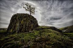 """""""The Sentinel"""", on Table Mountain near Oroville, California."""