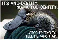 "[IMAGE DESCRIPTION: PROFILE OF A BABY PLATYPUS LYING ON A TURQUOISE BLANKET. TEXT READS, ""IT'S AN I-DENTITY, NOT A YOU-DENTITY. STOP TRYING TO TELL ME WHO I AM.""]"