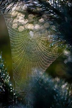 Delicate lace