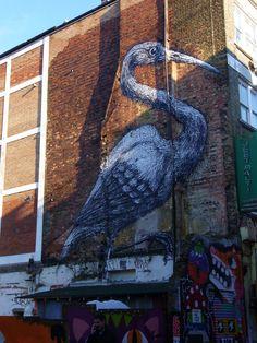 Pájaros de ciudad.