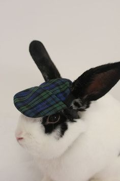 Tartan hat for your bunny rabbit  Protect those by turvytopsy, $19.00