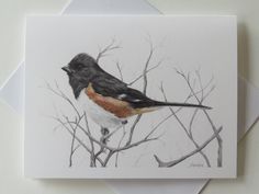Towhee in graphite and colored pencil. Fine art note card with towhee.  Wildlife art, bird art. Visit: https://www.etsy.com/shop/WildlifeArtbyMarlene?ref=hdr_shop_menu