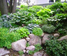 Shady slope: Hostas are a topnotch groundcover for shady areas. Plant them on a tough-to-mow hillside to create a lovely, carefree garden bed. If you have a steep slope that water runs down so quickly the soil can't absorb moisture, try breaking up the hill with rocks or other barriers. It will slow the flow of water.