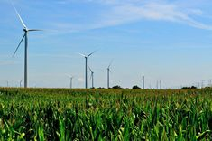 Xcel Energy has proposed four wind farm projects for the Midwest that could generate enough power for homes. Solar Energy, Solar Power, Wind Power, Champs, Cheap Electricity, Cheap Energy, Modern Farmer, Farm Projects, Energy Projects