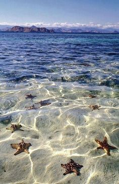 Starfish Beach, Grand Cayman Islands. Perfect spot for young children! Shallow, calm water, tons of starfish to find! Charter a private boat for the most tailored experience.