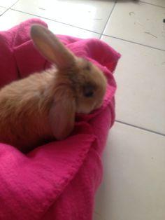 . Rabbit, Bunny, Animals, Rabbits, Cute Bunny, Animales, Animaux, Bunnies, Animal