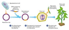 hongo adn recombinante - Buscar con Google