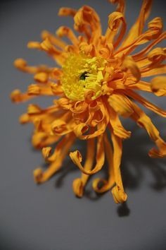 crepe paper chrysanthemum (mum flower) handcrafted by Papetal