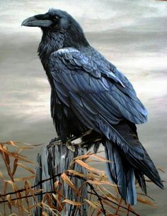 Rightfully Raven! There Hasn't Been A Day Go By Which I've Not Seen Or Heard A RAVEN. Chit Chat, Talking! Flying Gracefully... Watching Me. Yes, I Do En... - Peter Goettler - Google+