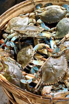 basket of blues (crabs), South Carolina