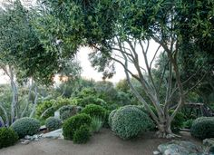 Skyhill Designs : 5 Simple Steps for Designing a Coastal Garden