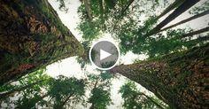 « Une forêt est bien plus que ce que vous voyez » dit l'écologiste Suzanne Simard. Sa recherche durant 30 ans dans les forêts canadiennes a mené à une découverte stupéfiante : les arbres parlent, souvent et sur de grandes distances. Apprenez-en plus sur les vies sociales harmonieuses mais compliquées des arbres et préparez-vous à voir d'un autre œil le monde naturel.