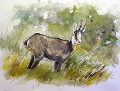 chamois standing in an autumn woods . watercolor sketch