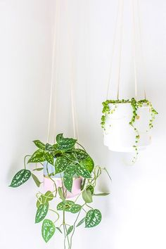 DIY Hanging Planter Upgrade - Give a hanging planter an easy DIY upgrade with paint and gold leaf - Diy Hanging Planter, Hanging Terrarium, Hanging Succulents, Hanging Flowers, Diy Planters, Terrariums, Terrarium Diy, Cactus, Best Indoor Plants