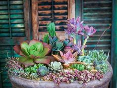 Succulent Arrangements for Southern California Flower Fans >> http://www.frontdoor.com/super-succulents-to-the-water-wise-rescue?soc=pinterest
