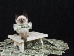 6 Ways to Turn Your Lazy Cat Into a Cash Cow   Catster