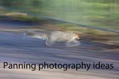 http://www.photo-geeks.com/panning-photography-ideas/ #photography #photo #digitalphotography #phototips #photographytips #photoideas #photographyideas