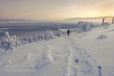 Auf kaltem Fuss http://ift.tt/1PwaAJe WinterFinnlandLapplandSchneeSkandinavienfinlandforesticekaamossnowsuomiwhitewinter