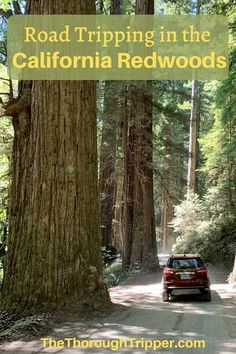 We visited the Majestic California Redwoods at Jedediah Redwoods State Park in Northern California as part of our Southern Oregon Coast Road Trip. Only about 30 miles across the California-Oregon border, the gigantic redwood trees are truly a spectacular must-visit. California Tours, California Attractions, California Coast, Northern California, California Living, West Coast Road Trip, Us Road Trip, Family Road Trips, Southern Oregon Coast