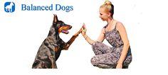 Dog Training Santa Monica, CA http://balanceddogs.com/