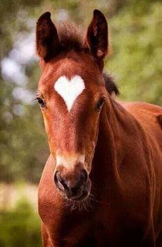 (Via Jose Luis Avila Herrera) BANCO DE IMÁGENES: 35 fotos de caballos para fondos de celulares - 35 Pictures of BEAUTIFUL Horses! <3