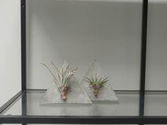 Concrete planters by PLANTRA design
