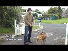 Dog Pulling on Leash? Here's How to Stop It! - Dog Training Me