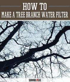 Make a Water Filter from a Tree Branch | Wilderness And Outdoor Survival Skills by Survival Life at http://survivallife.com/2015/12/11/tree-branch-water-filter/