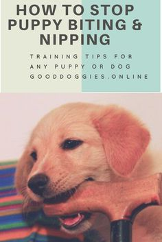 Check out these puppy training tips on how to get your dog to stop biting and nipping.