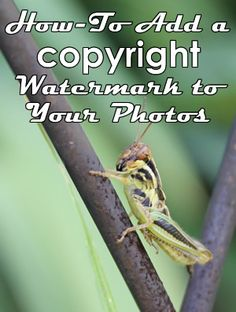 How-To Add a Copyright Watermark to Your Photos Using Pickmonkey upload your photo. Use the Text tool to add some text and set the 'fade' so the text is slightly transparent. Put the text over any part of the image you like. You may try and cover enough of the focal point to make the image unusable by people who would try to crop around or cover your watermark.