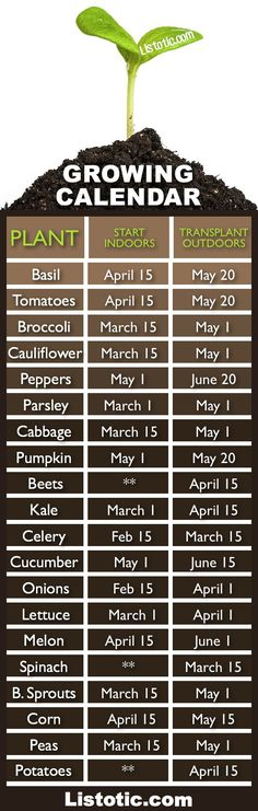 When To Plant Your Vegetable Garden - Garden Decor -  Thank to Listotic for this nice optimal planting dates, the sooner you start, the sooner you will have a garden full of beautiful vegetables! **For plants that don't need to start indoors.