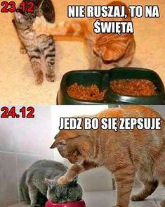 Cat Memes, Funny Memes, Jokes, Insta Memes, Polish Memes, Weekend Humor, Best Instagram Photos, Pet Adoption Center, Angry Cat
