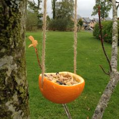Such a cute idea for bird feed in the winter!