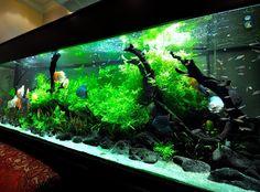 Planted Discus Aquarium http://www.americanaquariumproducts.com/