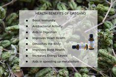 Oregano Essential Oil, Oregano Oil, Essential Oils, Speed Up Metabolism, Bone Health, How To Increase Energy, Health Benefits, Activities, Essential Oil Uses