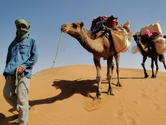 Berber, Animals, Camels, Morocco, Adventure, Hiking, Woman, Animales, Animaux